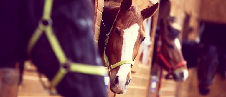 verkoop van een paard
